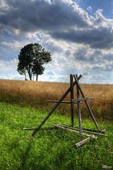 _DSC3431 (fototaza) Tags: grain tree grass sky cultivation