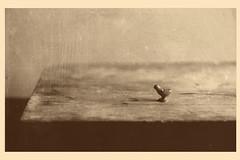 (n k l s) Tags: sepia postcard photography postprocessing vintage gimp