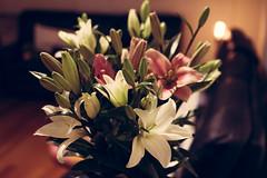 214-365 Boquet (cohenvandervelde) Tags: 365project australia cohenvandervelde cowes creativecommons explore flickr flickriver melbourne scout canon color colour flowers lights shadow