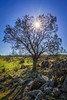 Winter Sun (*ScottyO*) Tags: mannum sa southaustralia australia pasture hill grass rocks tree sun sunshine blue sky green winter nature outdoor landscape shadows sunbeam farmland branches hdr exposureblend sticks twigs