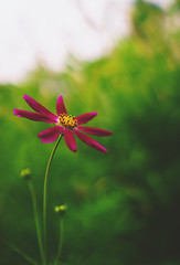 a good day for some flowers (L. Paul) Tags: flower beautiful beautifulflower pretty prettyflower bokeh sonya6300 sony28mmf2