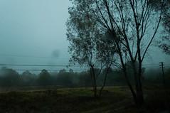 Niebla el Bosque (}JoAnto{) Tags: mexico lluvia jalisco sierra bosque niebla tapa