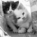Street Kittens, Marrakech