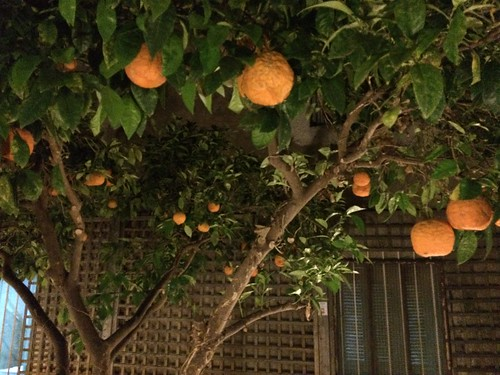 Oranges in the night