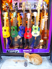 Istanbul music store with cat (ashabot) Tags: travel music cats colors turkey istanbul citystreets streetscenes worldcities