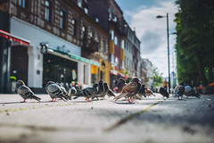 Birds | Kaunas | Summer 2016 #190/365 [Explored] (A. Aleksandravičius) Tags: city morning birds 35mm nikon sigma explore 365 lithuania kaunas lietuva sigma35 project365 365days explored d810 190365 nikond810 sigma35mmf14dghsmart 3652016