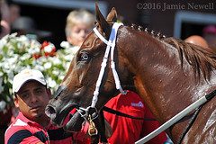 Bowie in the winner's circle at Saratoga (creepy_coyote) Tags: bowie saratoga
