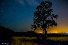 arbol con cielo estrellado (vilchesdavid) Tags: longexposure roses sky tree night stars lights luces noche nikon long cap estrellas nocturna empord largaexposicin norfeu