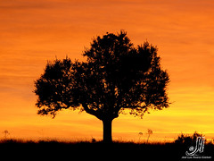 Sunset (jlalvarezphotography_nature) Tags: sunset espaa tree landscape arbol atardecer spain paisaje culebra zamora