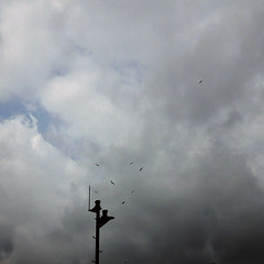 birds (Steve only) Tags: sky cloud birds lumix g snap panasonic asph f4 7144 vario m43 14714 714mm dmcg1