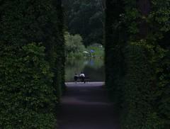 Wilanw garden / Ogrd w Wilanowie (dochtuir) Tags: sculpture garden royal poland polska palace warsaw residence warszawa rzeba paac wilanw ogrd