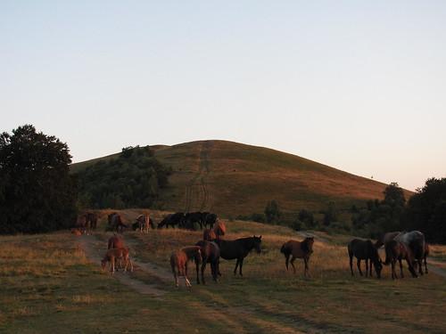 Диви коне по залез / Wild horses at sunset
