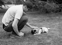 Pete and Monty (Mark Hickford) Tags: pug monty peter oxford mamiya m645 kodak trix 400 mediumformat 120