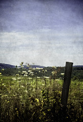 Midsummer at the monastery 4web (audleeenough) Tags: holy cross abbey monastery midsummer landscape