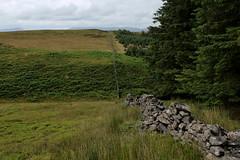 Ash Clough Swamp (Walruscharmer) Tags: moorland countyboundary bracken gisburnforest plantation ashclough brokendrystonewall bowland northyorkshire lancashire england aonb