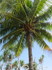 Locals climb palm trees as i cook potatoes!