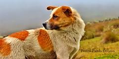 Dog pose (Pedro Pablo Orozco) Tags: perro