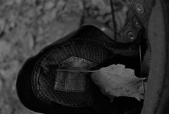 (elisecavicchi) Tags: hiking boot dark day evening gloaming shoe gear abandoned left leaf maple fallen felled downed forest woods poland maine shadow obscure detail intimate new england north eyelet lipped
