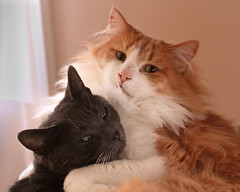 Best Buddies (paulpix1) Tags: cats beautifulcats
