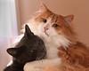 Best Buddies (paulpix1) Tags: cats beautifulcats