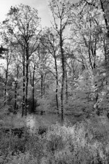 The edge of the forest (Ben Grader) Tags: wood mist tree grass leaves forest woodland landscape leaf scenery branch view grove timber sony scenic scene infrared tamron limb prospect bough coppice aspect a350