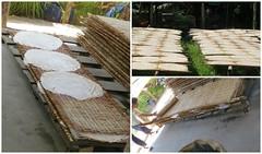 Stap 3 van het proces van het maken van Rice Noodles (MTTAdventures) Tags: family sun factory rice noodle drogen bamboe
