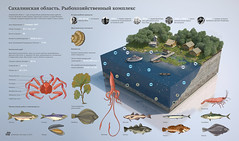 Fishery complex of Sakhalin region (infostep_infostep) Tags: fish russia informationdesign infographics sakhalin infostep fisherycomplex