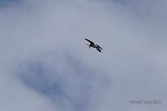 Vought F4U Corsair-25 (Clubber_Lang) Tags: airshow corsair farnborough f4u vought fia2016