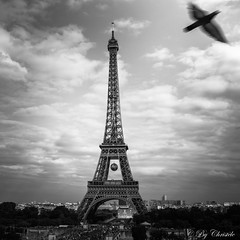 La Belle et la bte (christelerousset) Tags: bw nb blackwhite eiffel toureiffel paris euro2016 oiseau bird trocadro france pigeon fly