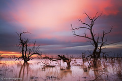 Sunset at Menindee Lakes, Outback NSW, Australia (renatonovi1) Tags: sunset menindeelakes outback nsw australia lake water tree brokenhill landscape
