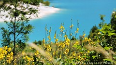 Il giallo del tesoro turchese (_Nick Outdoor Photography_) Tags: img7044 nickphotography regionemarche montisibillini nationalpark lagodifiastra ginestre lagoturchese turquoise bokeh