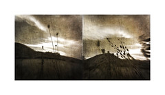 Beyond the verge (mark kinrade) Tags: landscape manx lezayre tebrown diptych