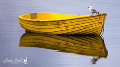 Gull on a boat (Jennie Stock) Tags: newzealand redbilledgull silvergull thulebay chroicocephalusnovaehollandiae seagull boat stewartisland ryanscreekwalk dinghy yellow