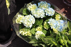 Blue Hydrangea (Josiedurney) Tags: london spitalfields shoreditch east end art columbiaroad flowers market flowermarket summer uk england city capital hydrangeas tulips blue purple pink orange peonies acer plants money bunches roses red sky hipster july