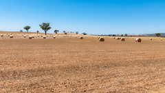 Hot summer (Derek Midgley) Tags: blue summer sky brown hot sunshine earth country australia victoria burning hay bales arid scorched dsc7356