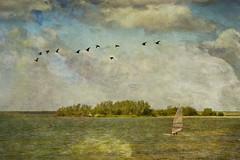 windsurfing Makkum (jacqaar) Tags: nederland netherlands windsurfing ellen van deelen texture salvaja anna