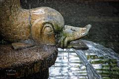 (202/16) Fuente de los Delfines y de las Ranas (Pablo Arias) Tags: pabloarias espaa spain hdr photomatix nx2 photoshop texturas arquitectura fuente detalle escultura parque elcapricho madrid comunidaddemadrid agua