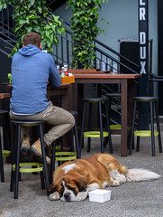After a Hard Day (Jocey K) Tags: newzealand christchurch architecture building plants people table chairs cbd duxcentral dog saintbernard