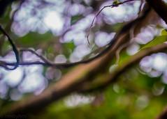 (hmxhm) Tags: abstract aotearoa nature newzealand olympus wellington zealandia