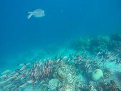 Fischschwarm Riff Malediven