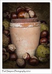 Conkers in a pot (Paul Simpson Photography) Tags: conker conkers fall fruitsofautumn autumn autumnfruit autumnal naturalworld nature imageof imagesof photosof photoof paulsimpsonphotography september2016 sonya77 imagesofautumn autumnalimages photosofautumn plantpots pots stilllifephotography