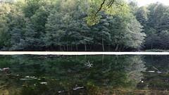 Calm Lake (hikmetozgozen) Tags: forest nature lake yedigller bolu