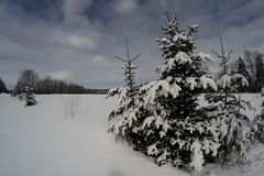 Out There (thegreatnorth_mtl) Tags: snow nature march adirondacks fisheye adventure upstatenewyork snowshoeing newyorkstate wilderness winterhiking opteka65mm nikond3100