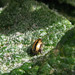 Escarabajo metalico