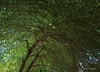 Life under the arm of a tree (Antoine - Bkk) Tags: tree green thailand vault arbre xm1 darktable