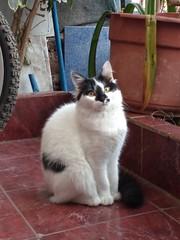 osa (lugares_comunes) Tags: gato felino osa gatita