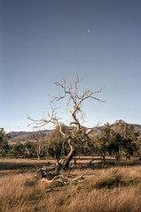 raw0038 (squid.bert) Tags: film bushwalking canberra olympusxa2 sunny16 hillvale