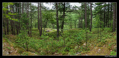 Wooded (lyncaudle) Tags: forest lyncaudle nature northwoods pano trees woods