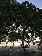 Early Morning (MyFWCmedia) Tags: trees sunrise fwc myfwc myfwccom wildlife florida floridafishandwildlife conservation johnpennekamp keylargo flkeys floridakeys floridastateparks johnpennekampcoralreefstatepark park pennekamp lovefl