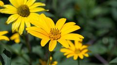 201608_19_2560 (noriko_v) Tags: flower summer nature